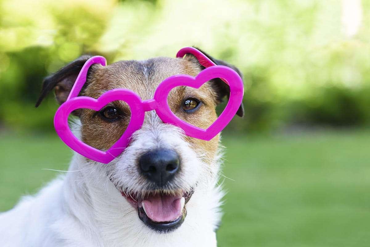 Partnersuche fur hundebesitzer