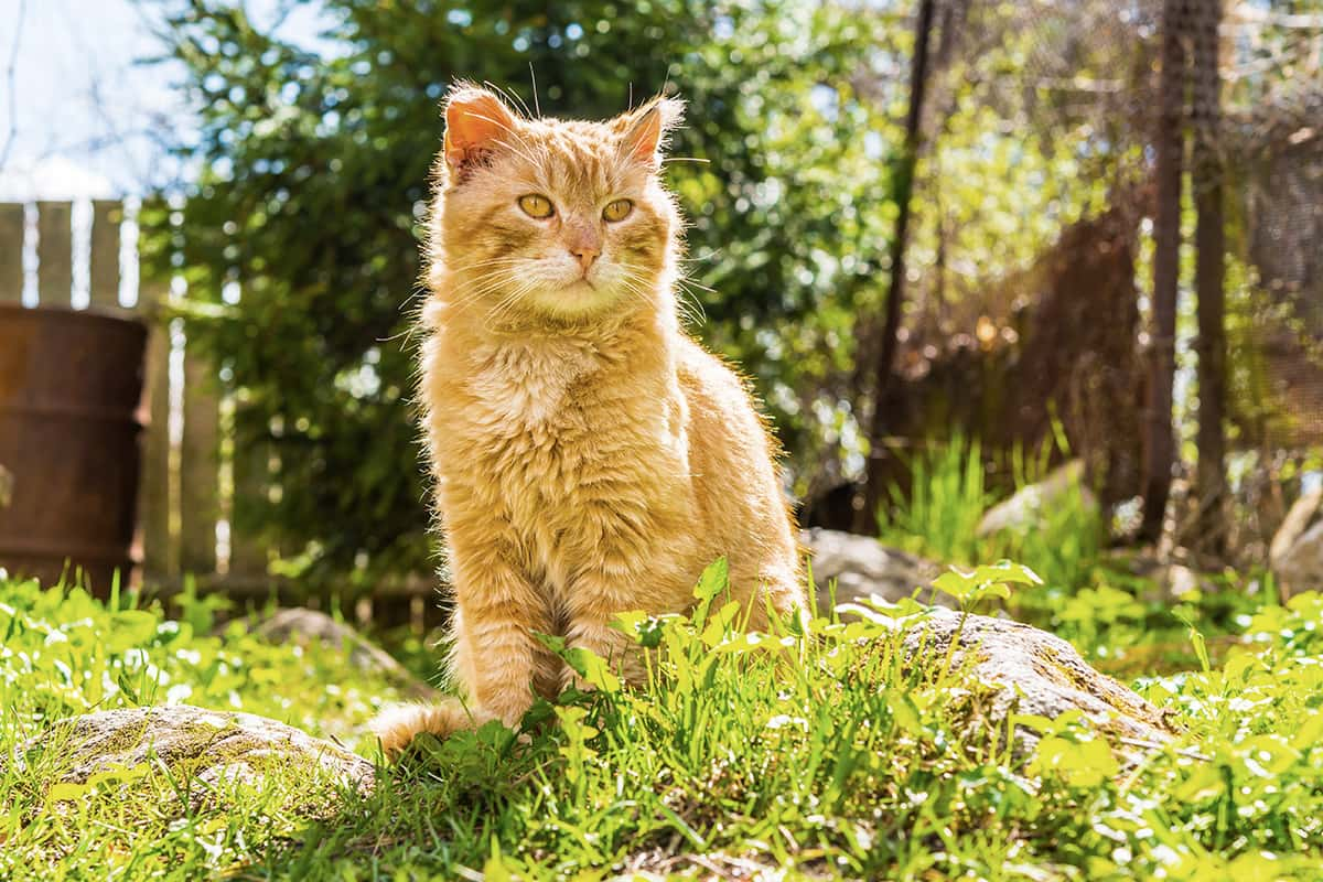Alte Katze Wird Immer Dünner