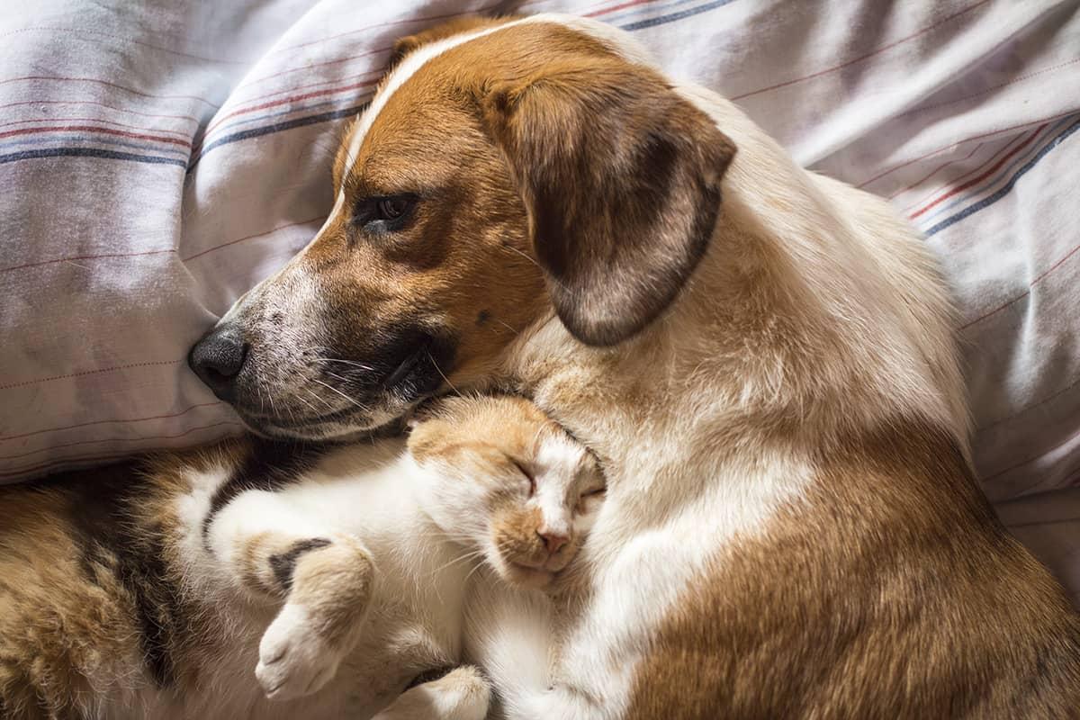 kennenlernen hund und katze partnersuche siegen